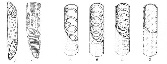 Plantes et botanique les tissus v g taux for Interieur a la spirale