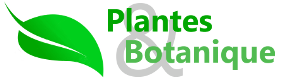 Plantes et botanique