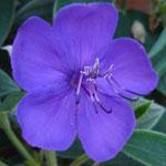 Plantes exotiques diverses