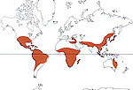 Carte de repartition des Phytolaccaceae
