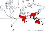 Carte de repartition des Pittosporaceae