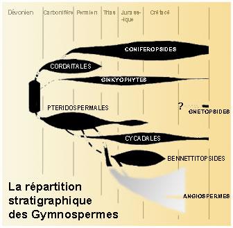 Gymnospermes